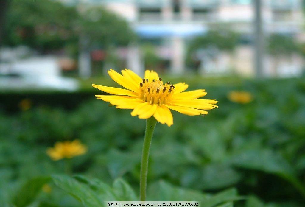 野花 近距离 自然景观 自然风景 摄影图库