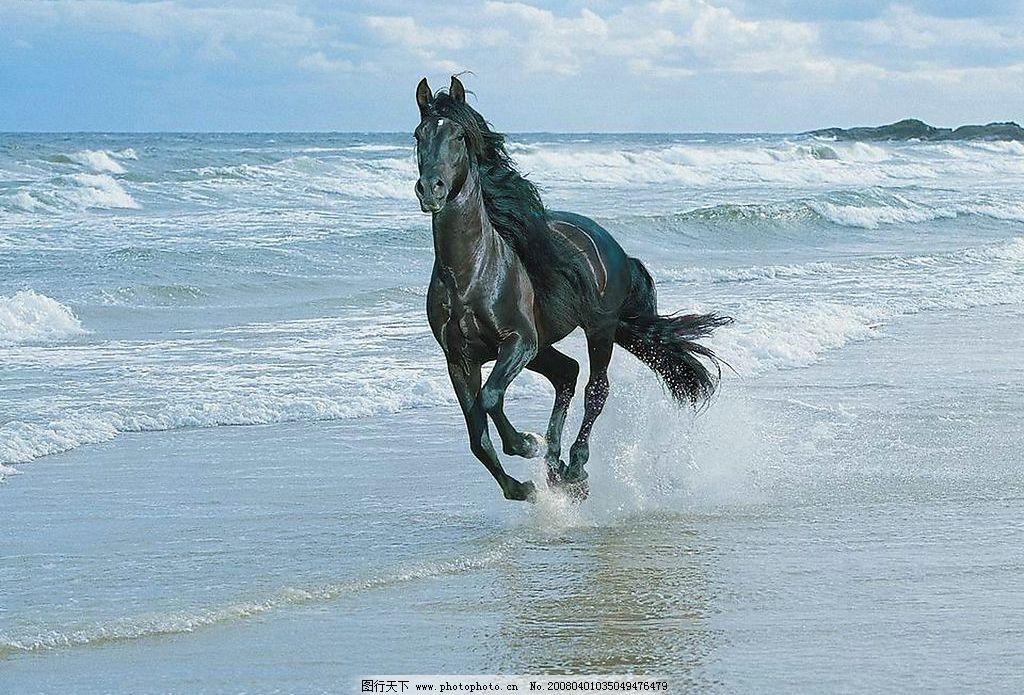 骏马 海边 生物世界 野生动物 俊马 摄影图库 254 jpg