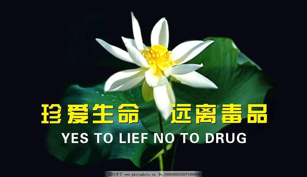 关爱生命 远离毒品 关爱 生命 远离 毒品 珍爱生命 荷花 psd分层素材