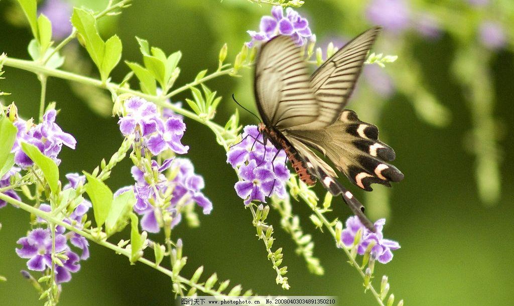 春天 蝴蝶和花图片