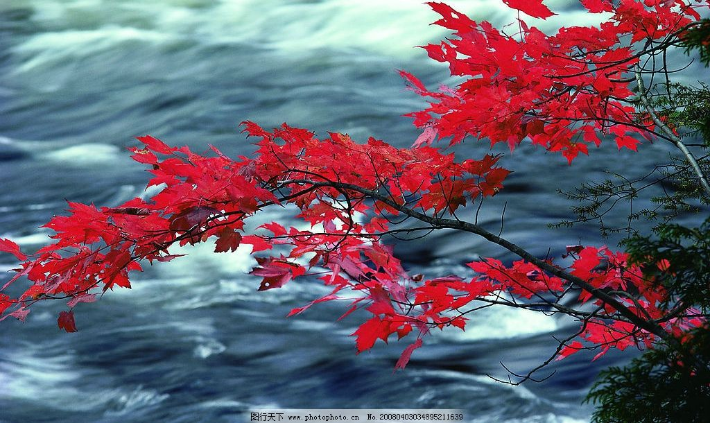 美丽风景 红色枫叶 小溪 流水 经典图片 摄影 美丽的风景 摄影图库