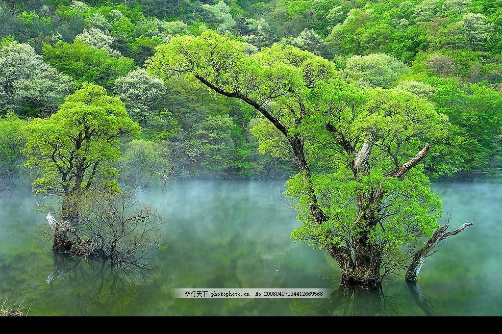 春天树木 山水风景