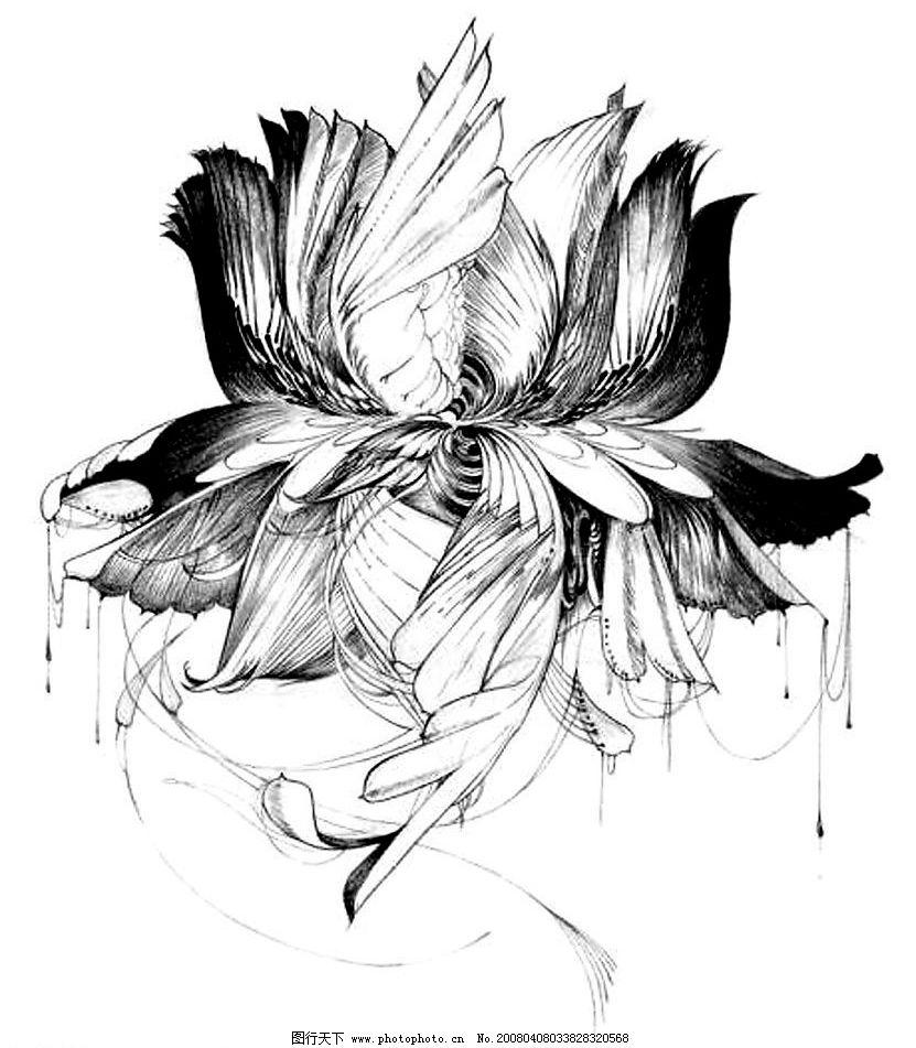 钢笔白描手绘莲花装饰画图片