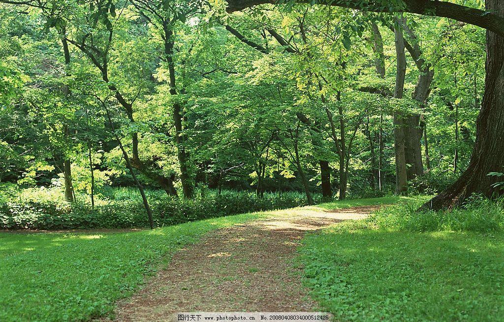 转弯的路 大树林 转弯 草地 旅游摄影 国外旅游 路 摄影图库 350 jpg