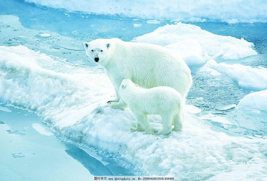 北极熊 冰山 jpej格式 1.5mb 生物世界 野生动物 摄影图库 266 jpg