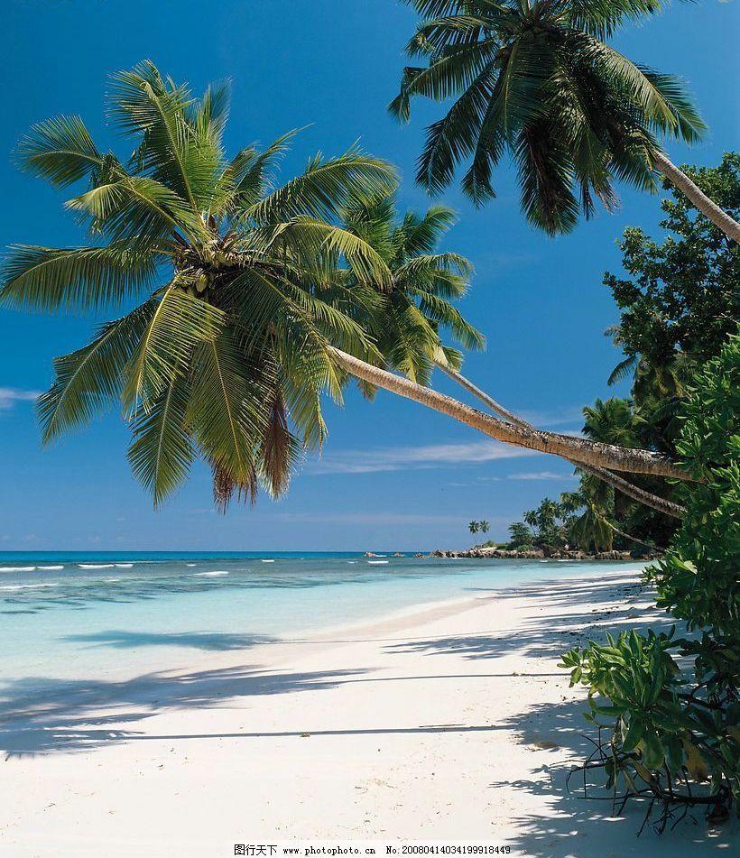 海边风景 海边的大树和沙滩 旅游摄影 旅游风光 摄影图库