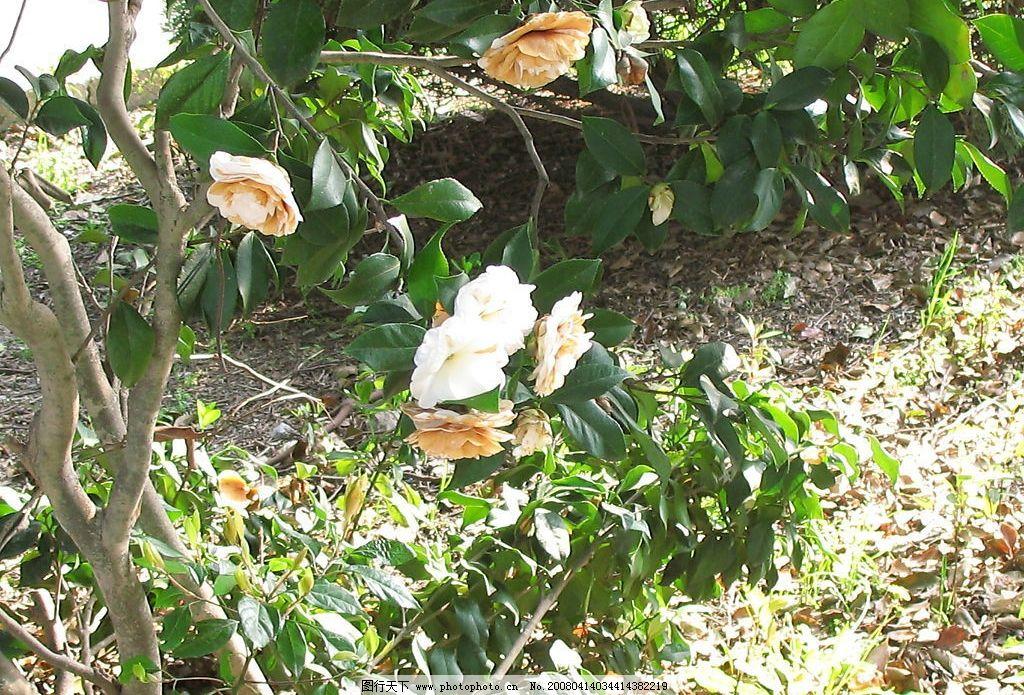 花开 春天 绿叶 树 自然景观 山水风景 旅游拍拍 摄影图库