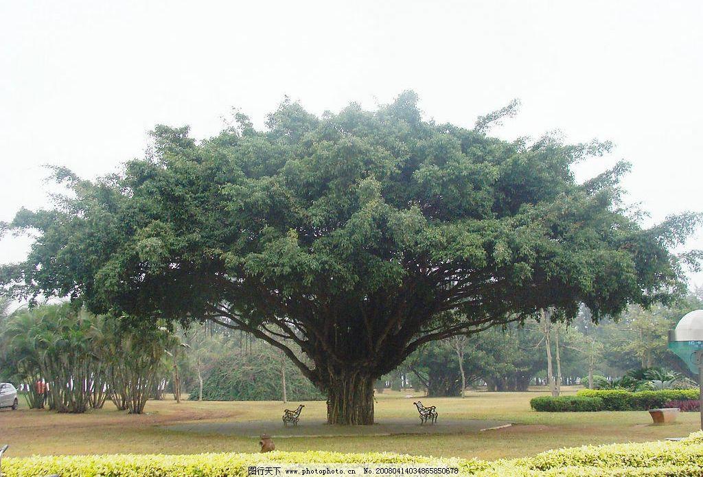 一棵大樹 樹木 自然景觀 自然風景 攝影圖庫 72 jpg