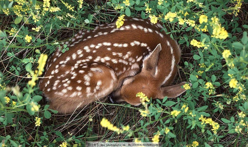 动物世界 鹿 非洲动物 草原 草原动物 摄影图库