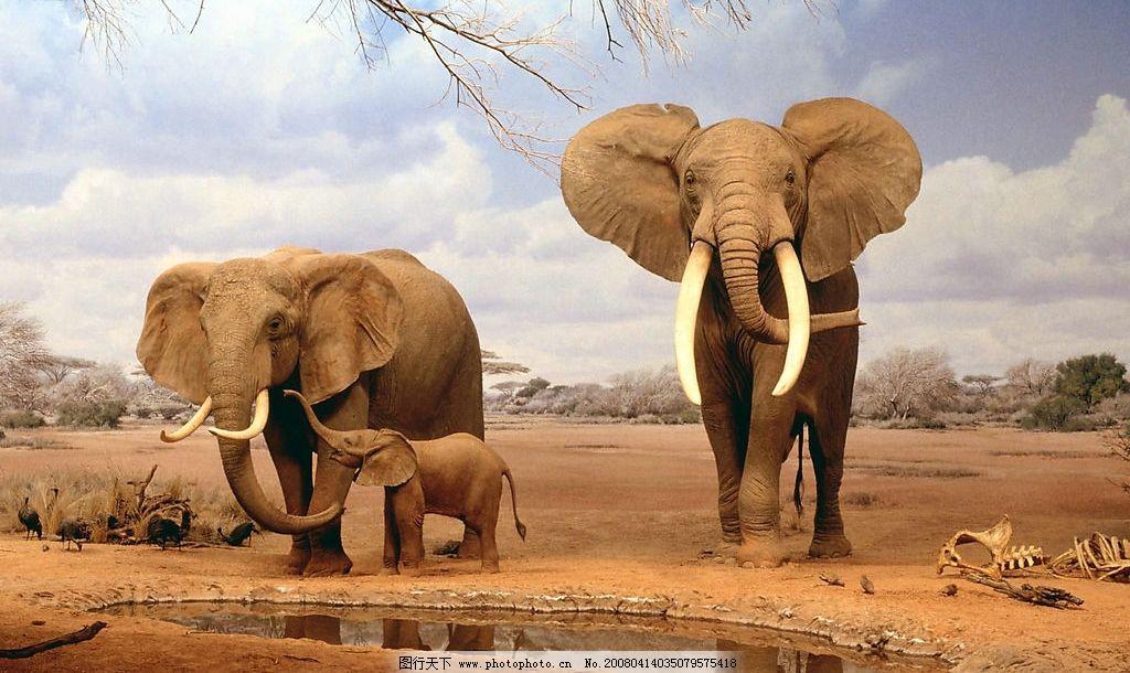 动物世界 大象 小象 非洲动物 草原 草原动物 生物世界 野生动物