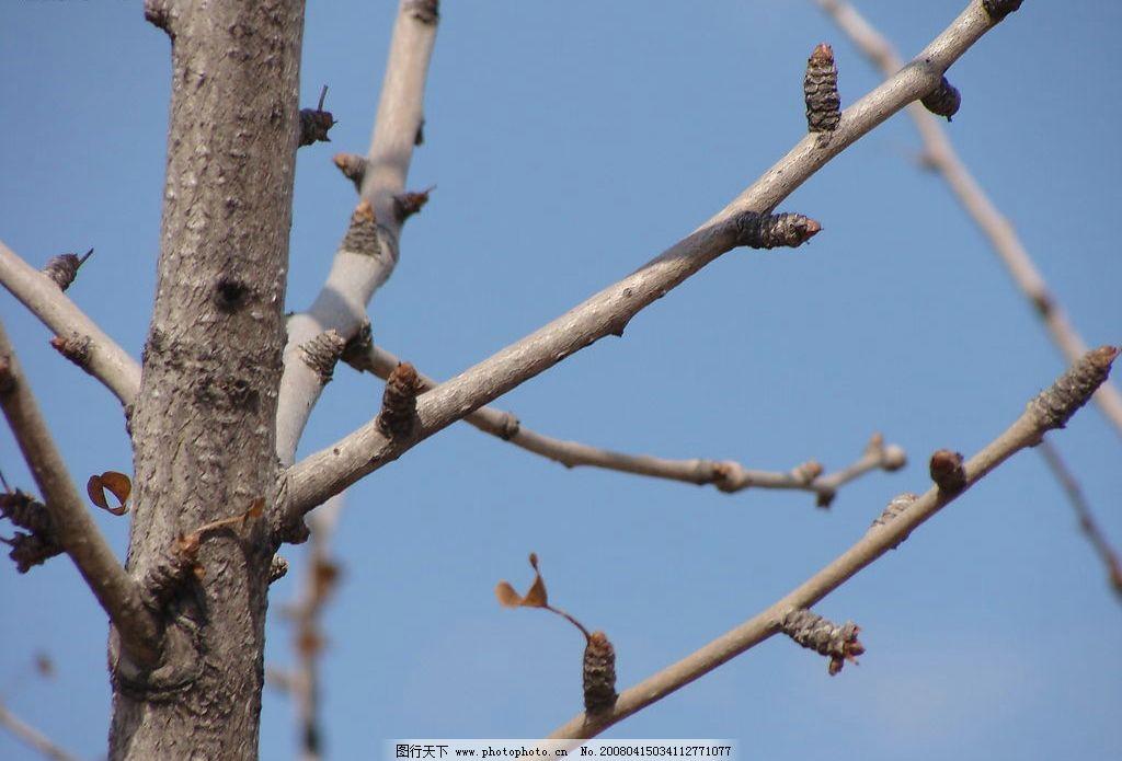 新枝 春 嫩芽 旅游摄影 自然风景 繁花绿叶枯枝 摄影图库