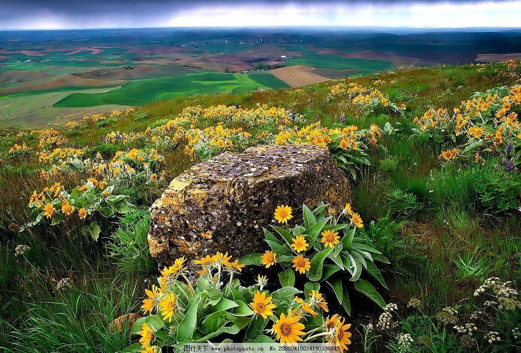 满地花朵 风景 鲜花 花岗 旅游摄影 摄影图库