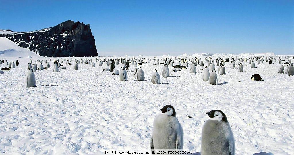 冰天雪地 动物世界图片