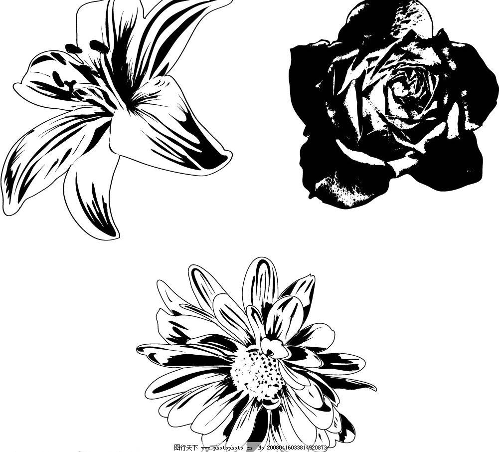 黑白花卉 其他矢量 矢量素材 黑白经典 矢量图库