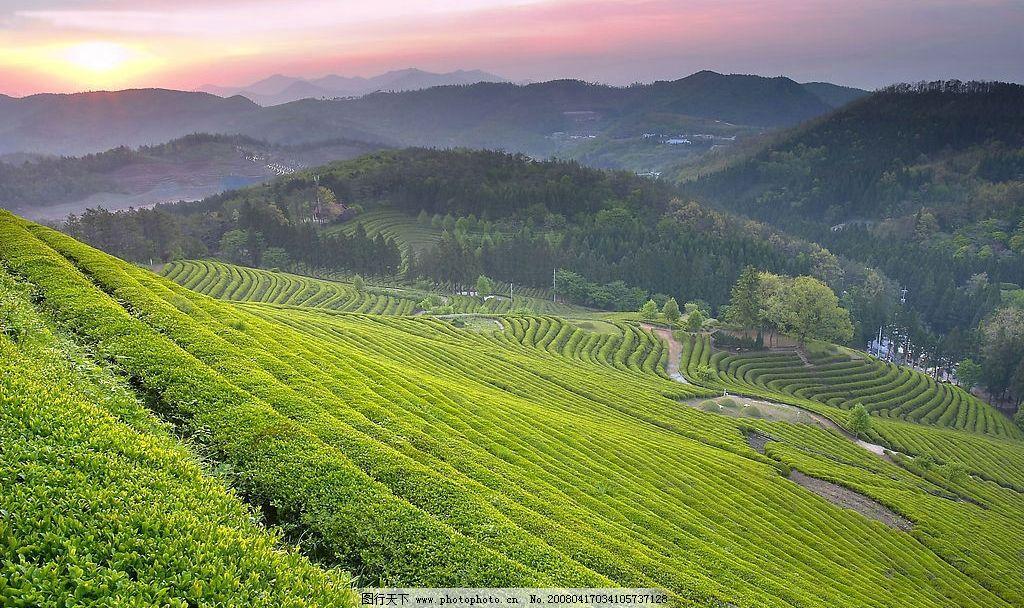 陆地旷野 陆地 旷野 大自然 植物 绿色 美丽景色 旅游摄影 自然风景