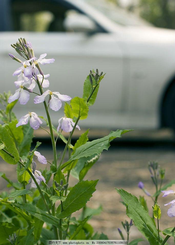 春天的小花图片