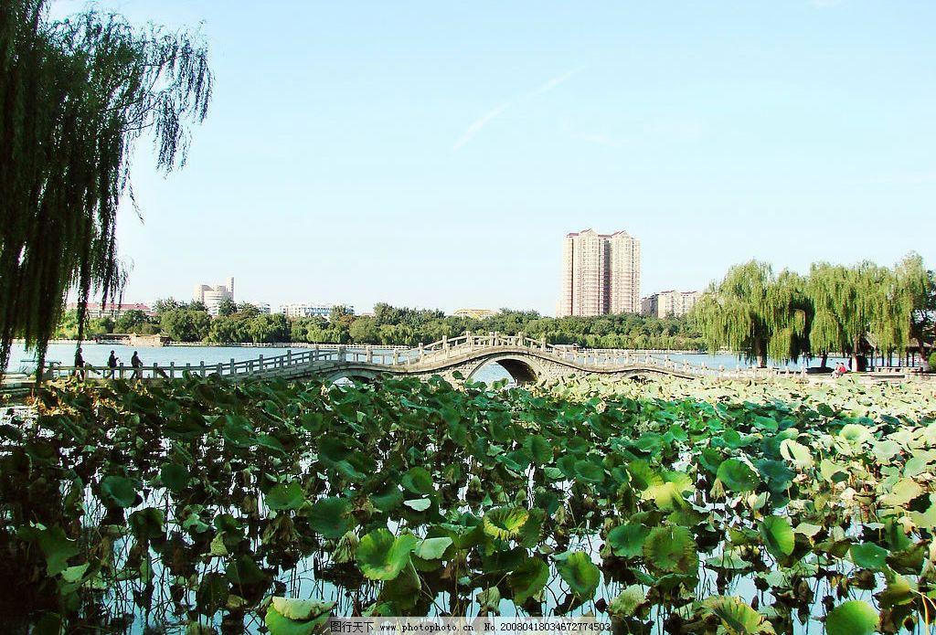 大明湖秋色 风景 泉城 济南 摄影图库