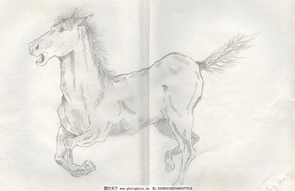 素描 马 生物世界 野生动物 设计图库 72 jpg