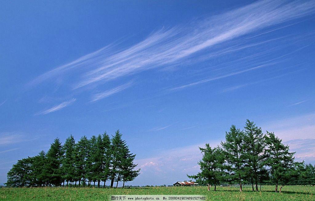 清风自然 云淡 树 植物 绿地 天空 自然景观 自然风景 天空与太阳