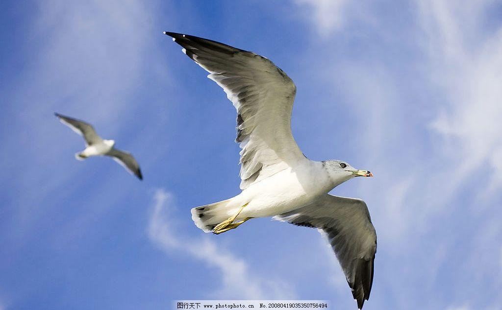 飞鸟 天空 飞翔 羽毛 翅膀 生物世界 鸟类 摄影图库