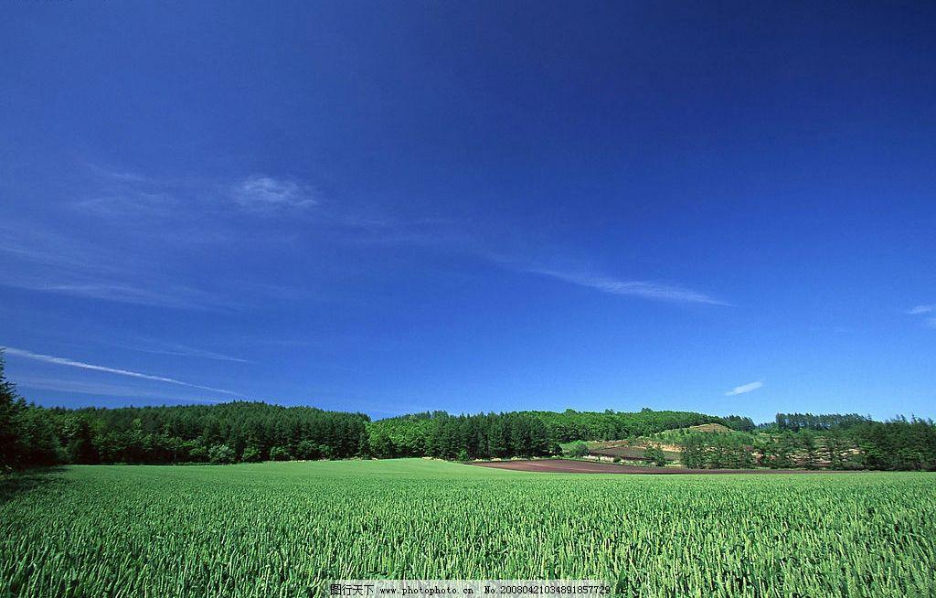 麦地春天 麦地 春天 农田 蓝天 晴朗 自然 自然景观 自然风景 天空与