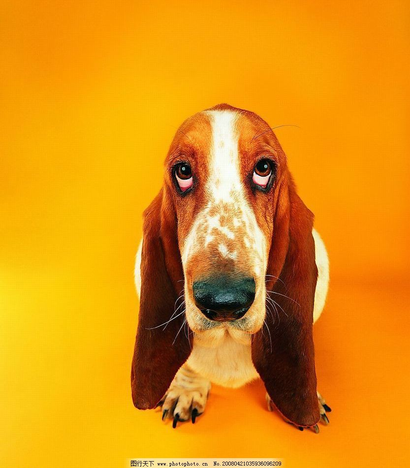 宠物狗 生物世界 家禽家畜 可爱狗狗 摄影图库 72 jpg