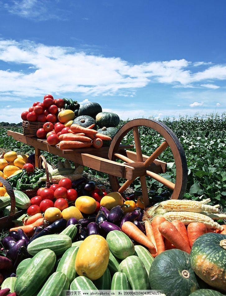 丰收 水果 蔬菜 瓜果 喜悦 秋 田园 农田 蓝天 白云 餐饮美食 食物