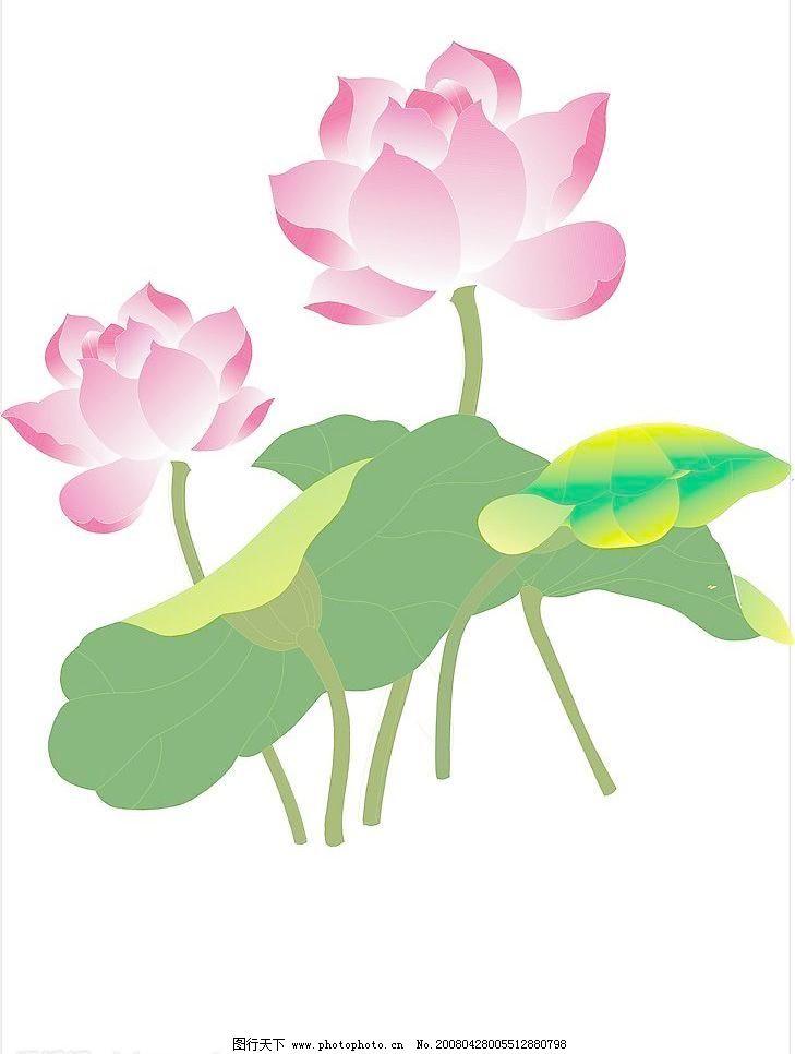 荷花8 矢量图库 田园风光 自然景观 荷花牡丹 其他矢量图
