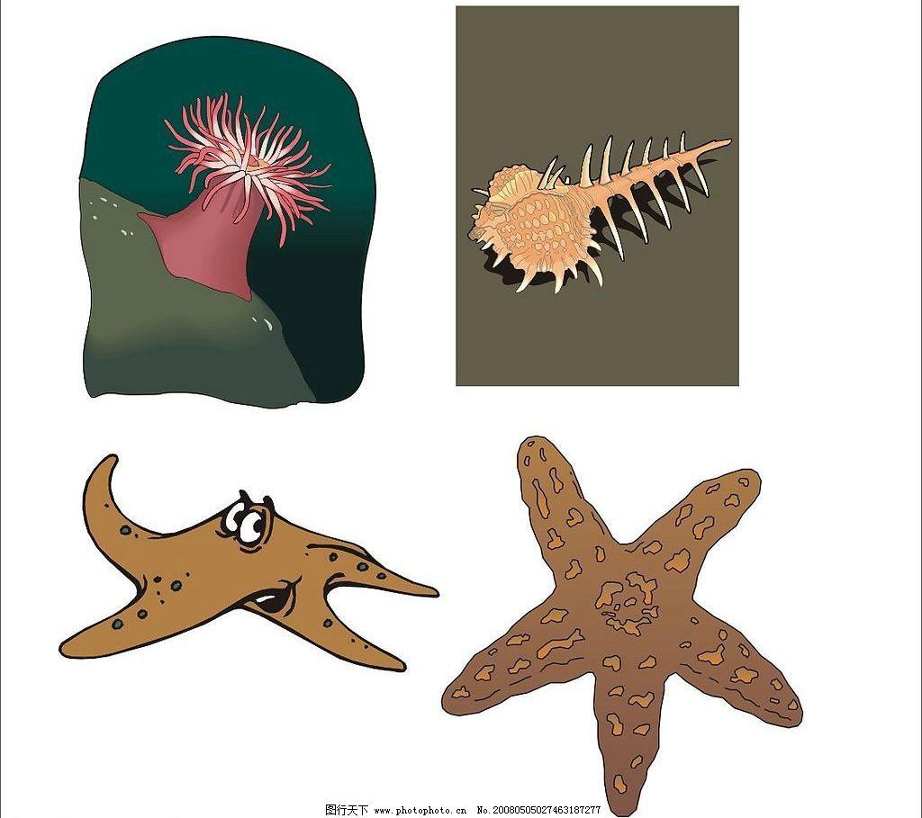 海洋生物 海葵海星海螺 生物世界 矢量图库