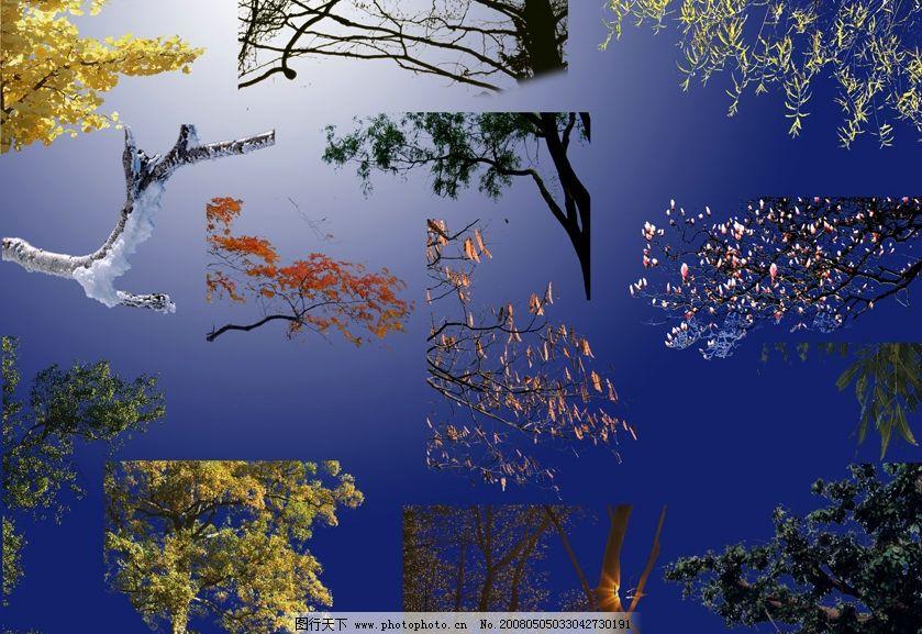 ps后期各种角树配景分层图片系列一 psd分层素材 源文件库 600 psd