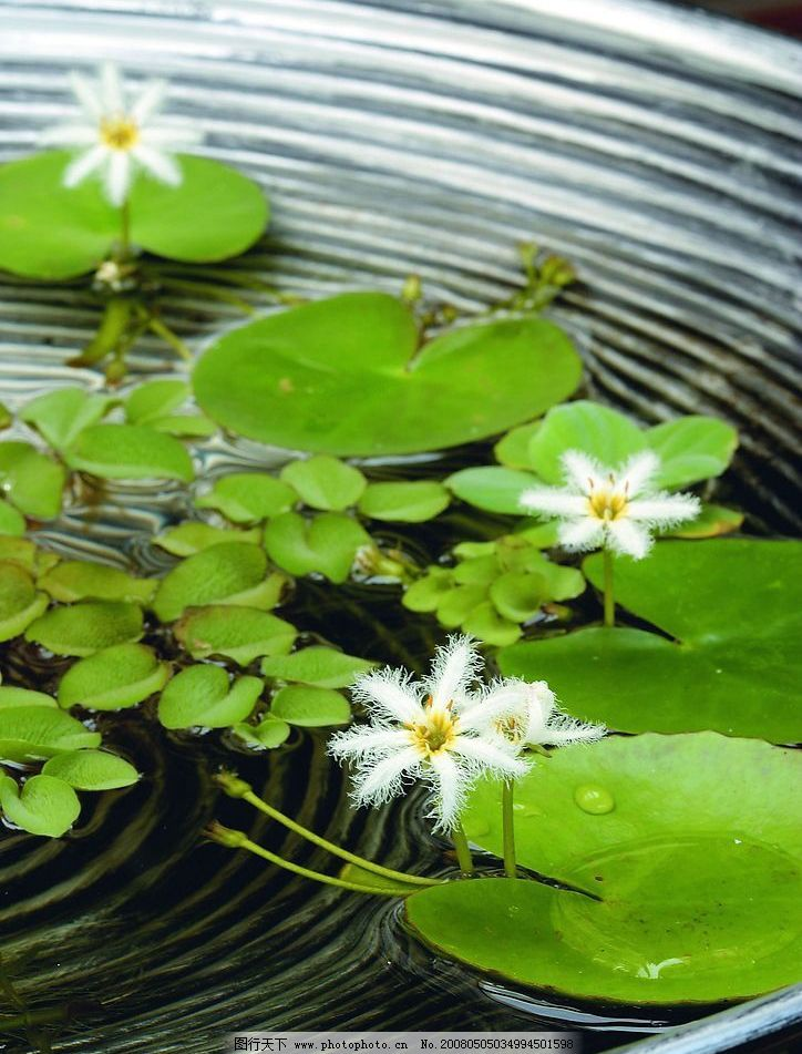 绝美风景 精致 绿色 静 意境 优美 自然 清新 叶子 浮萍 摄影图库