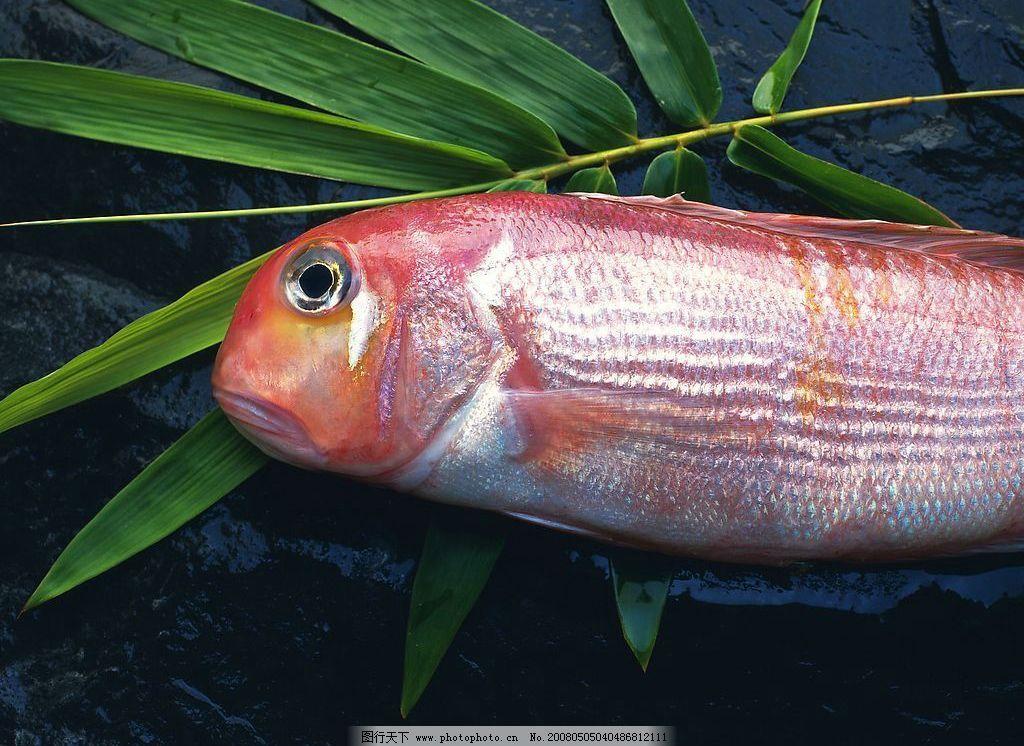 海鱼 食用海鱼 餐饮美食 食物原料 摄影图库 350 jpg