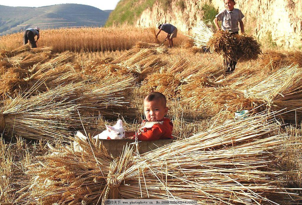 丰收 麦收 山村 农村 打麦子 快乐 农民 收麦子 麦子 儿童 其他 图片