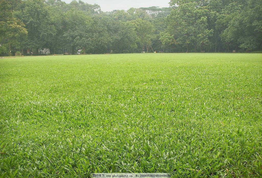 大片的草坪 近处大片的草坪 远处茂密的树林 自然景观 自然风景 摄影