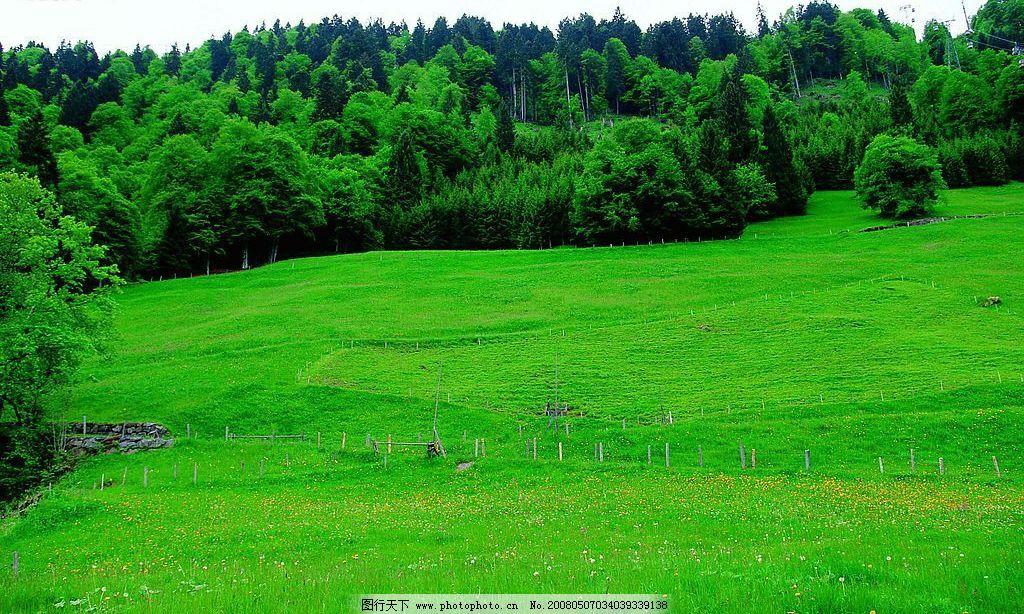 奥地利风情 空旷草坪 草地 绿树 秀丽风景 国外旅游 埃及旅游