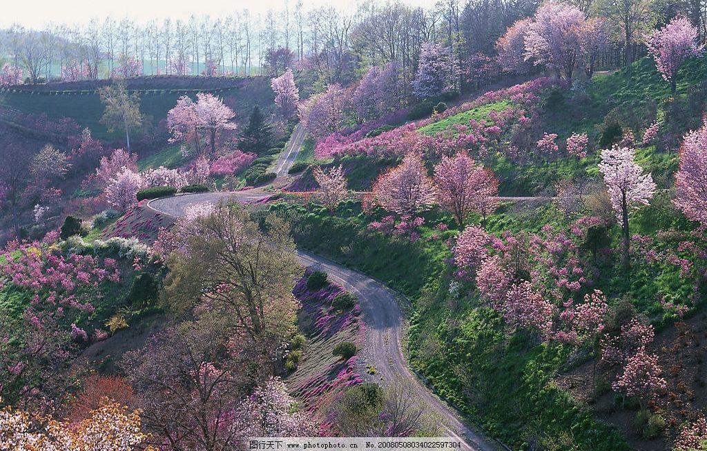 设计图库 自然景观 旅游摄影    上传: 2008-5-8 大小: 1020.