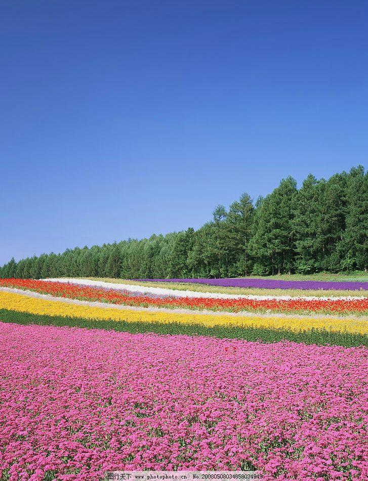 自然风景 自然花草 自然景观 摄影图库 350 jpg图片
