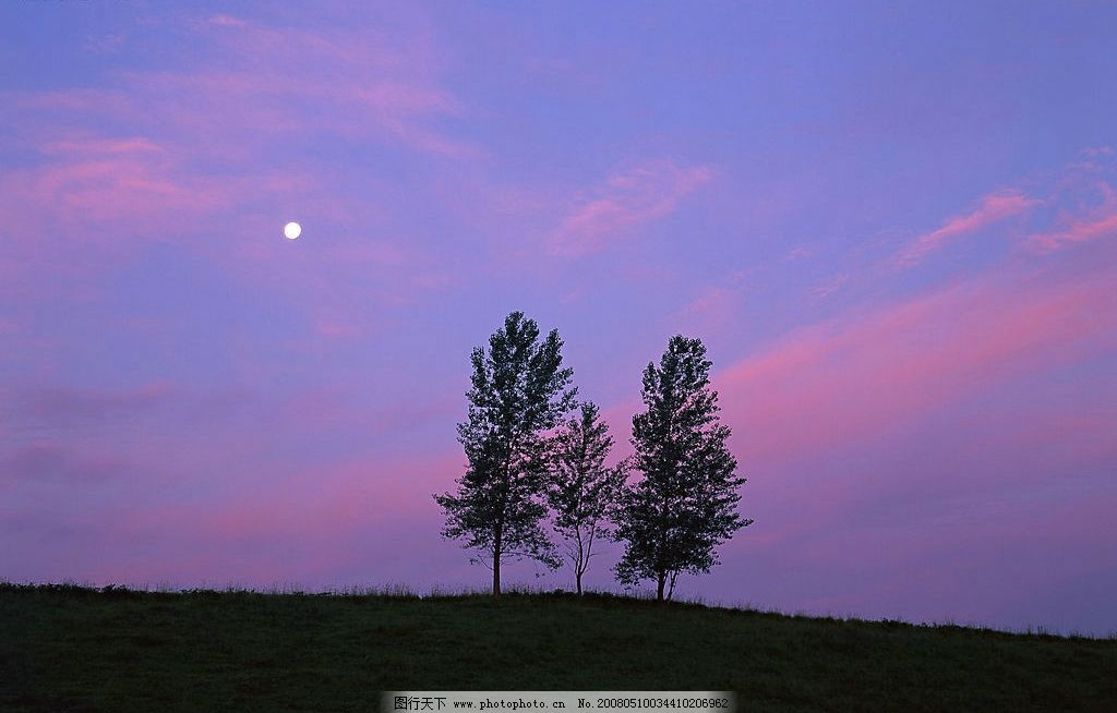黄昏 黄昏大树 自然景观 山水风景 摄影图库 350 jpg