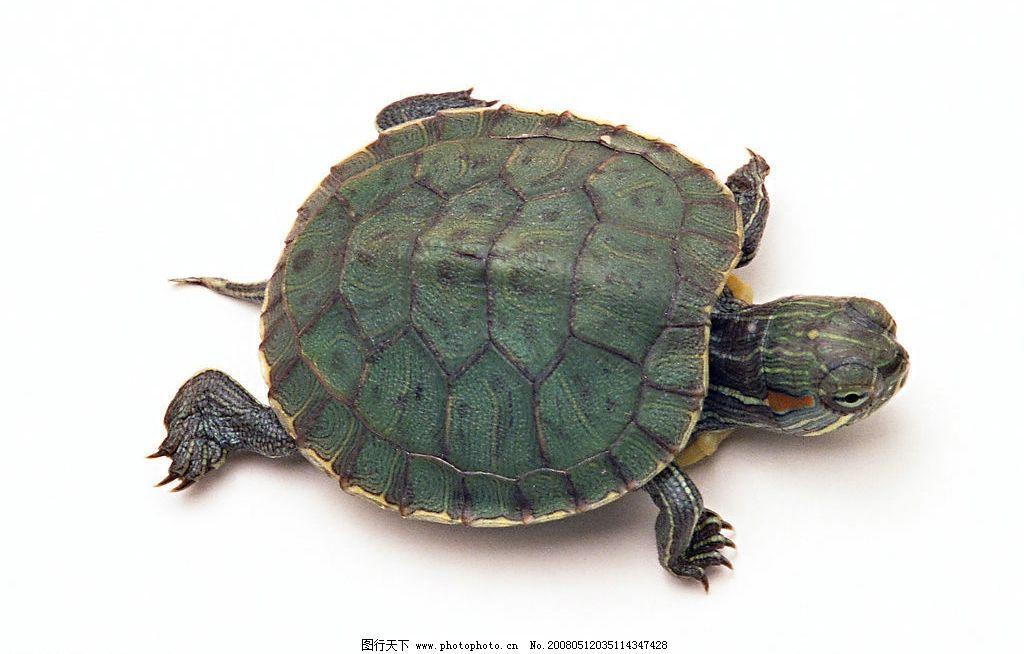 塑料瓶子手工制作乌龟