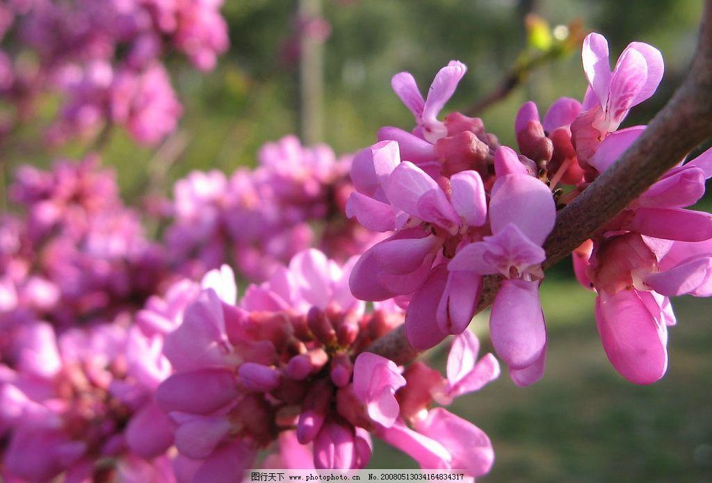 桃花 旅游摄影 自然风景 摄影图库 180 jpg