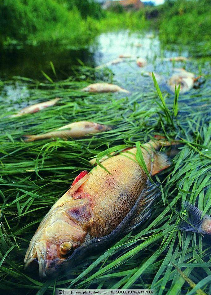 水污染 因环境污染而死去的鱼