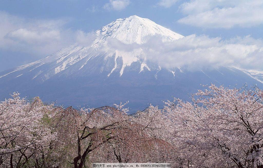 富士山风景 雪山 雪景 樱花 日本风景 摄影图库