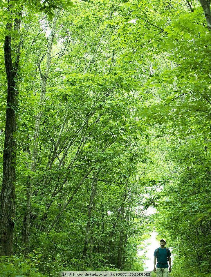 林间小道 树林 旅游 夏天 旅游摄影 自然风景 美丽风光素材 摄影图库图片