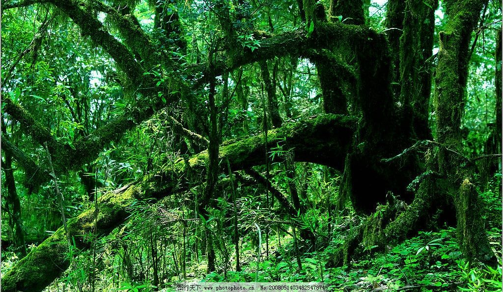 绿色丛林 绿色 丛林 原始森林 自然景观 自然风景 摄影图库 300 jpg