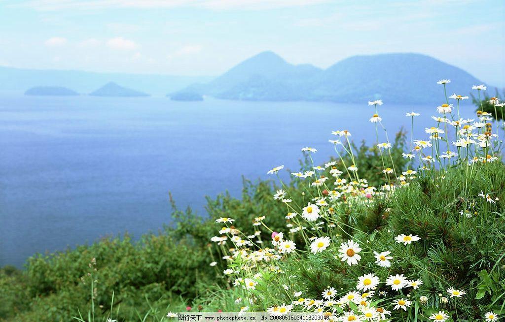 山花 海边与小岛 海边 小岛 夏天 旅游摄影 自然风景 美丽风光素材