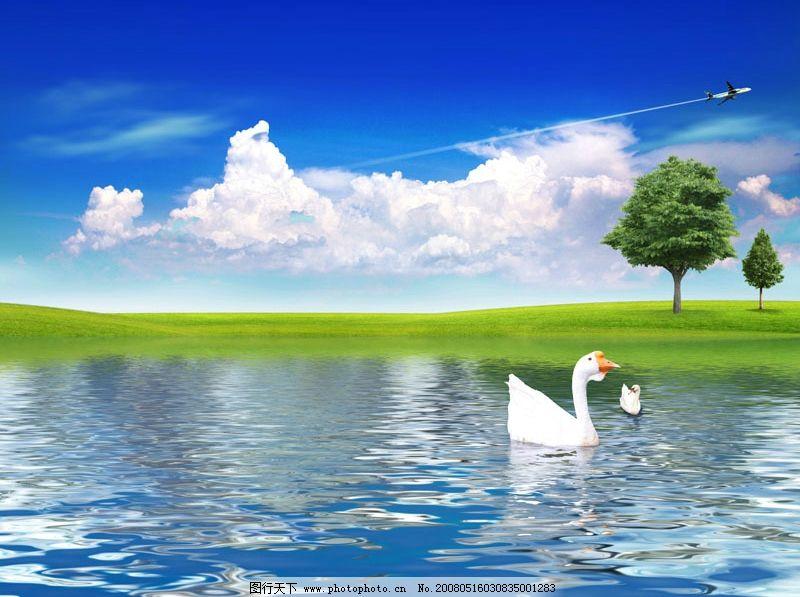 自然美景 湖水 草地 蓝天白云 飞机 大树 天鹅 广告设计模板