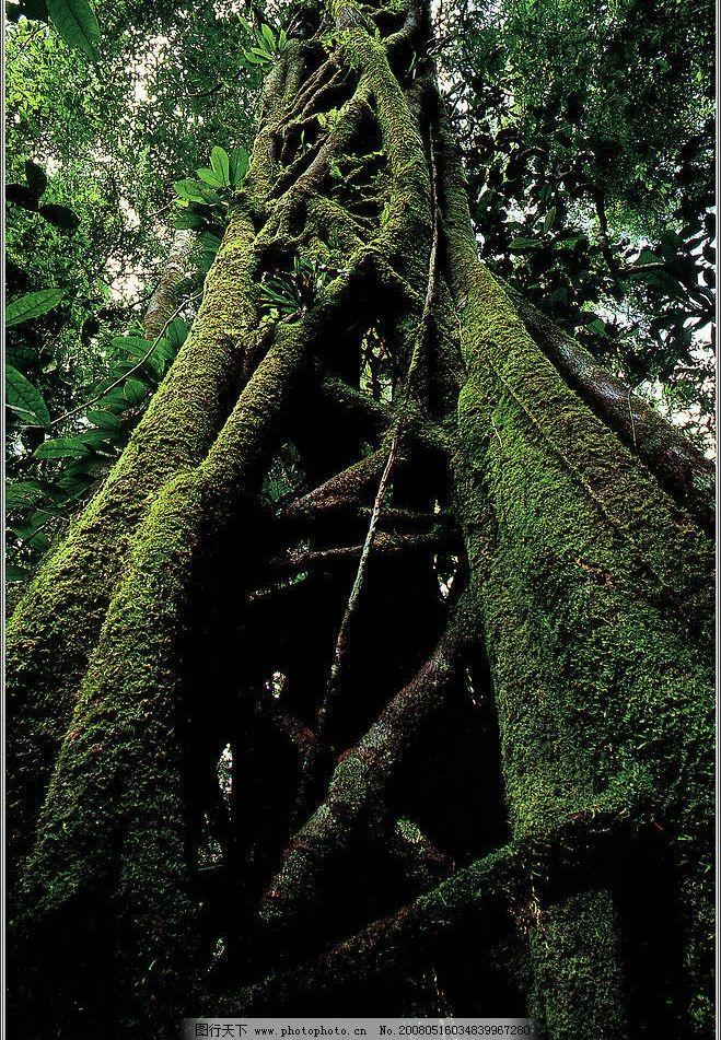 森林大树怎么画