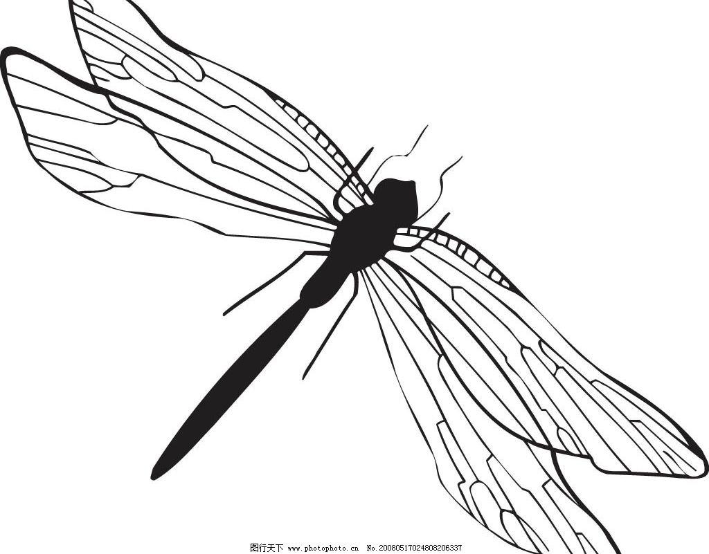 蜻蜓矢量图图片