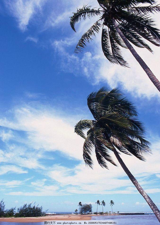 树与天空 自然景观 山水风景 摄影图库 72 jpg