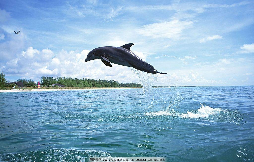 跳跃的海豚 海水 海洋动物 摄影图库